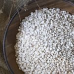 Adlai: The Healthier Alternative to Rice, Its Nutritive Value and Uses